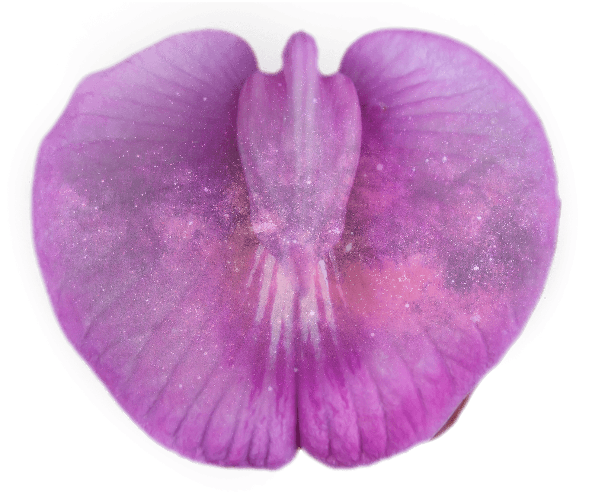 cosmic.orchid